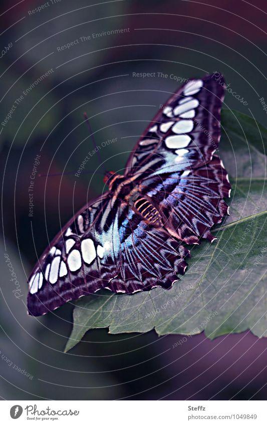 spread your wings Natur blau Sommer fliegen Beginn Flügel Textfreiraum Schmetterling dunkelgrün Vor dunklem Hintergrund