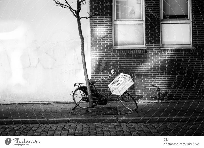 antwerpen Baum Haus Fenster Wand Straße Wege & Pfade Mauer Fahrrad Verkehr Fahrradfahren Pause Güterverkehr & Logistik Verkehrswege Kopfsteinpflaster Mobilität