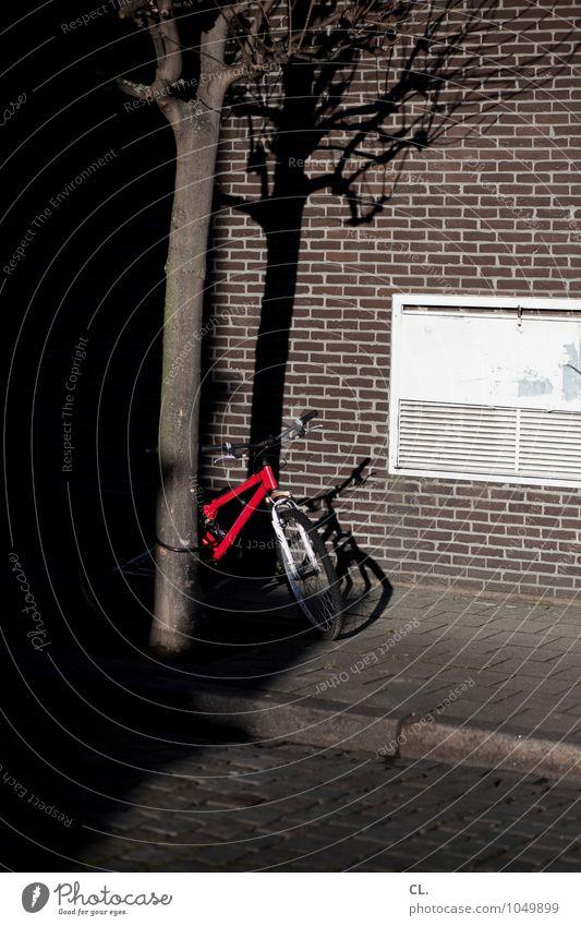 fahrräder sind schöner Fahrradfahren Schönes Wetter Baum Haus Mauer Wand Verkehr Verkehrsmittel Verkehrswege Straßenverkehr Wege & Pfade Kopfsteinpflaster rot