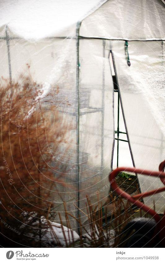 Wintergarten Pflanze Winter kalt Herbst Gefühle Garten Lifestyle Eis Freizeit & Hobby Wachstum Häusliches Leben Pause Frost Landwirtschaft nachhaltig Forstwirtschaft