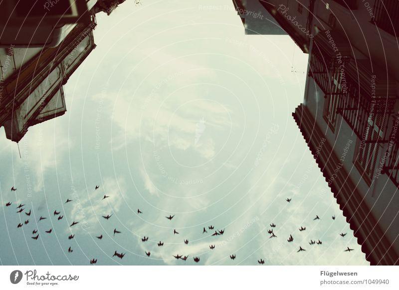 wegfliegen Haus Tier Umwelt Wand Architektur Herbst Gebäude Mauer fliegen Vogel Wetter Klima Tiergruppe Bauwerk Klimawandel Schwarm