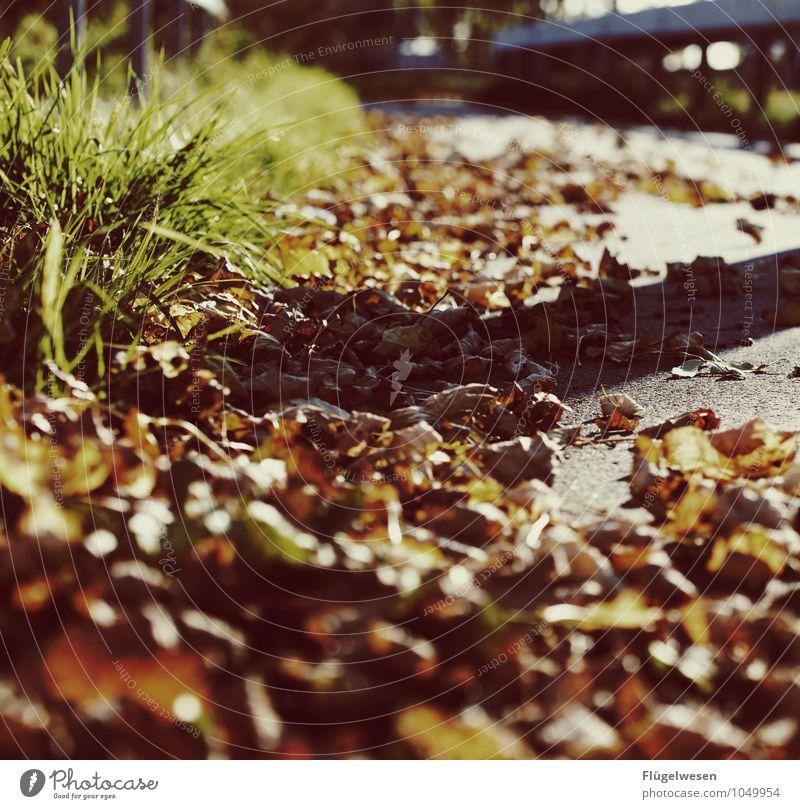 Herbstnachmittag Natur Ferien & Urlaub & Reisen Pflanze Baum Landschaft Blatt Umwelt Straße Bewegung Gras Wege & Pfade Freiheit Wetter Sträucher Klima