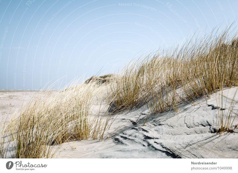 Sommer Natur Ferien & Urlaub & Reisen Pflanze Sonne Meer Landschaft Strand Ferne Küste Gras Hintergrundbild Sand frisch Schönes Wetter Wolkenloser Himmel