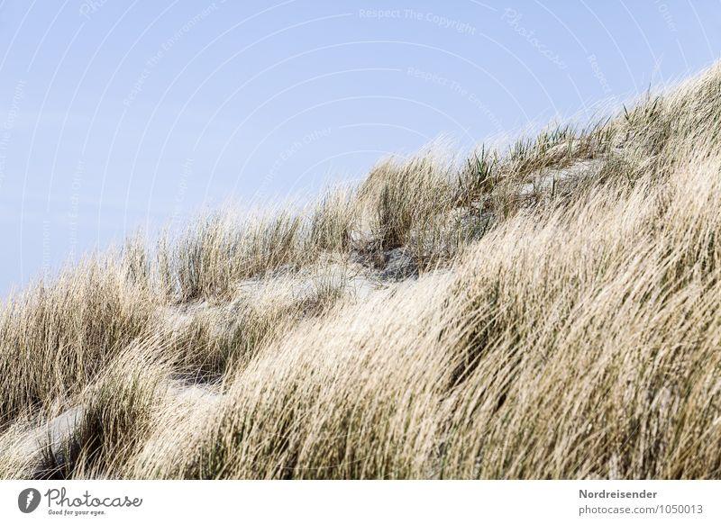 Düne Ferien & Urlaub & Reisen Sommer Sommerurlaub Strand Meer Natur Landschaft Pflanze Wolkenloser Himmel Schönes Wetter Gras Küste Sand maritim Stranddüne