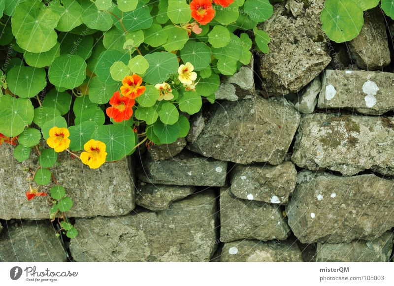 Garten Eden? Mauer Pflanze Wachstum Kräuter & Gewürze rot gelb grau Grenze grün Blume Steingarten Wegrand schäbig schön Gift trüb schlechtes Wetter Furche leer
