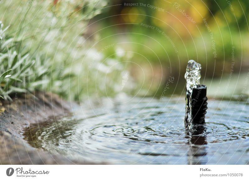 leichtes Plätschern Natur Wasser Wassertropfen Frühling Pflanze Garten Stein nass grün Wasserspiegelung Springbrunnen Wasserspritzer Brunnen Gartenbau Farbfoto