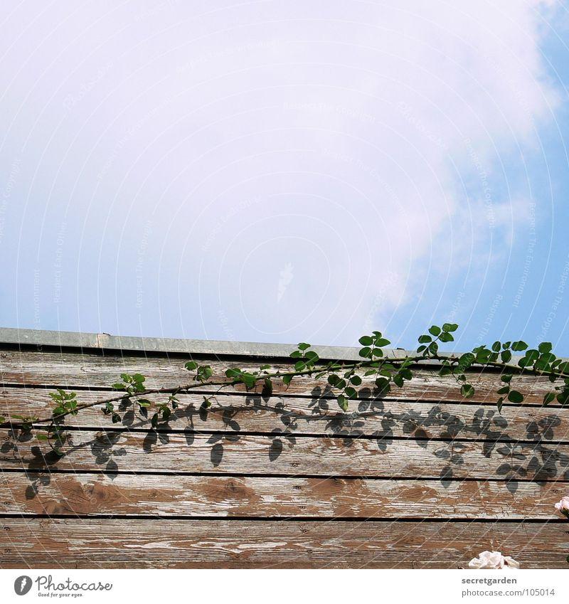 dornröschenbusch Himmel Sonne blau Pflanze Sommer ruhig Haus Wolken Erholung Wand Garten Holz Park Rose verstecken Holzbrett