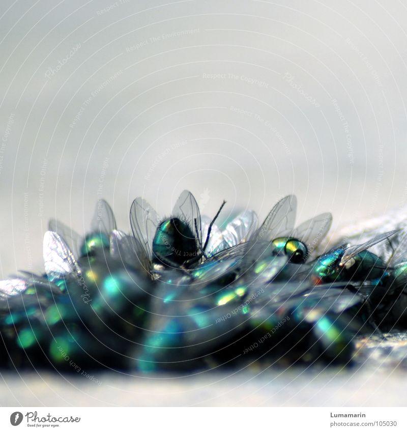 Verputzkolonne weiß Blume grün blau Ernährung Leben grau Metall glänzend Fliege fliegen Flügel Insekt Reinigen Verfall türkis