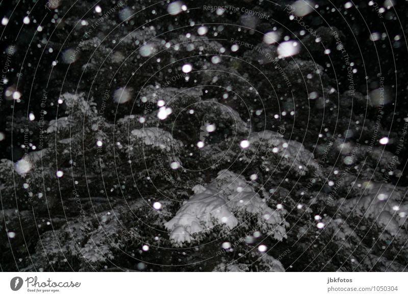 Winter isn`t over Natur kalt Umwelt Schnee Schneefall Eis Wind Frost Unwetter Sturm schlechtes Wetter Flocke Winterwald