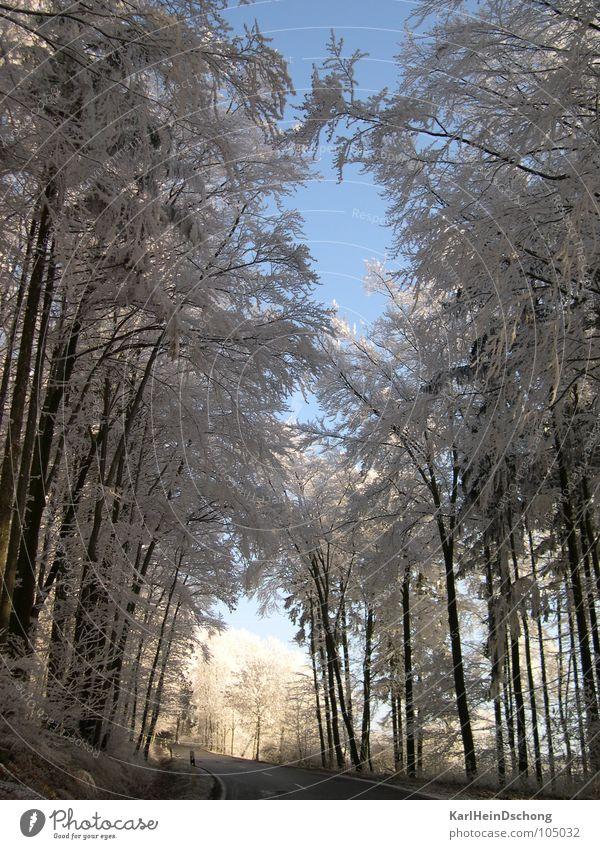 Eisiger Weg ins Licht Baum Sonne Winter Straße Schnee Frost Tunnel Allee Raureif Tunnelblick