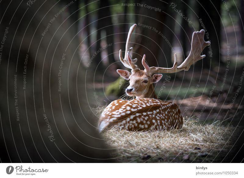wachsam Natur Sommer Baum Tier Wald natürlich liegen maskulin Wildtier authentisch ästhetisch beobachten Schutz Punkt entdecken Wachsamkeit