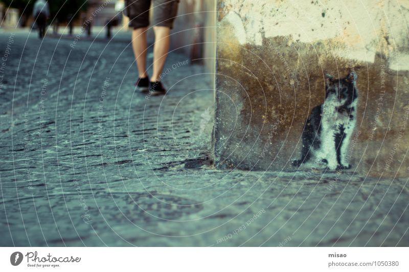 auf der Lauer auf der Mauer sitz ne kleine Katze Mensch Mann Stadt Sommer Tier Erwachsene Wand Straße Graffiti Beine maskulin dreckig Design Tourismus