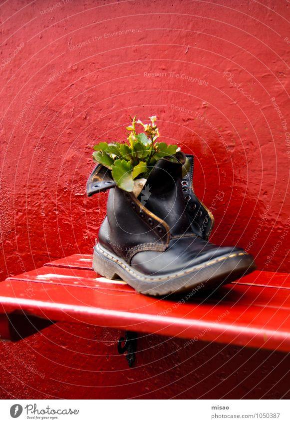 neue Heimat Natur Stadt Pflanze grün schön rot schwarz Leben Holz klein Kunst außergewöhnlich Mode Wachstum Erfolg Schuhe