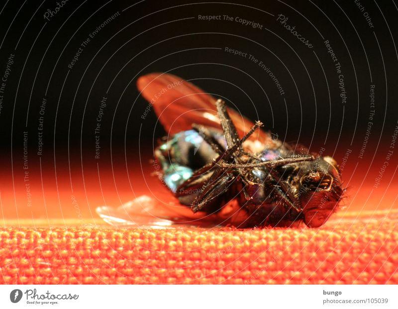 Es gibt nichts umsonst. Tod Leben liegen Fliege Flügel Vergänglichkeit Insekt Ekel Gliederfüßer