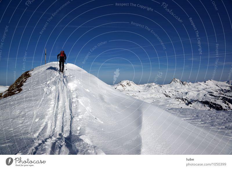 Skitour Wintersport Skifahren 1 Mensch Umwelt Natur Landschaft Schnee Alpen Berge u. Gebirge Gipfel Schneebedeckte Gipfel Abenteuer kalt Bregenzerwald