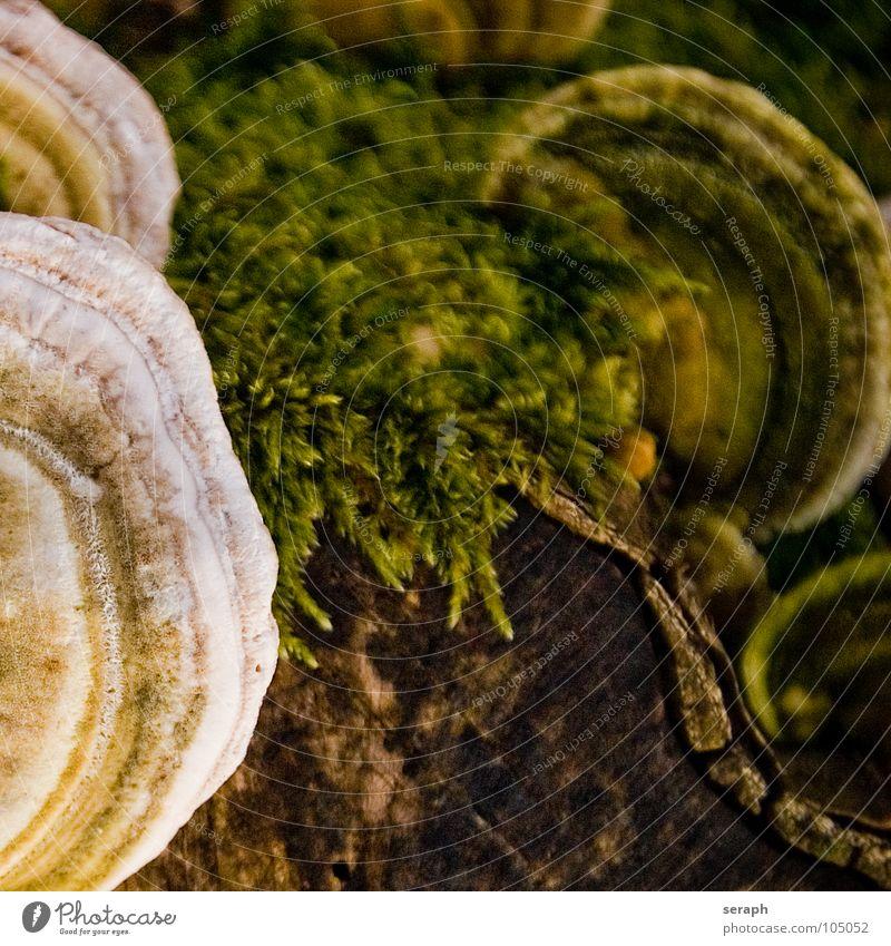 Baumpilze Pilz Pilzhut Moos Flechten Baumstamm Baumstumpf verrotten Schimmelpilze Lebensformen Symbiose Boden Waldboden Baumrinde braun Herbst herbstlich