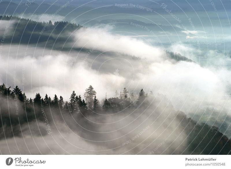 Herbstnebel Freiheit Umwelt Natur Landschaft Klima Nebel Berge u. Gebirge Kanton Freiburg Deutschland Baden-Württemberg Europa Menschenleer ästhetisch
