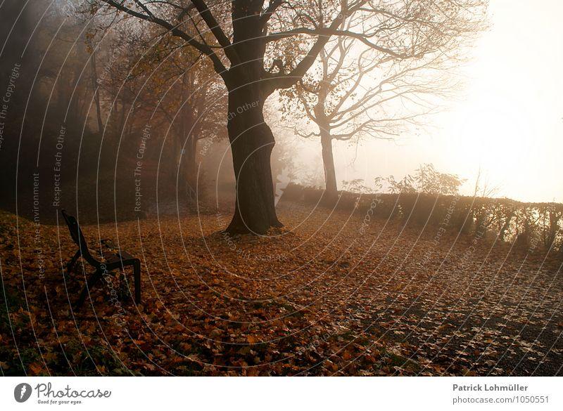 Herbststimmung Umwelt Natur Landschaft Erde Wetter Nebel Wald Freiburg im Breisgau Deutschland Baden-Württemberg Europa ästhetisch dunkel Stimmung ruhig
