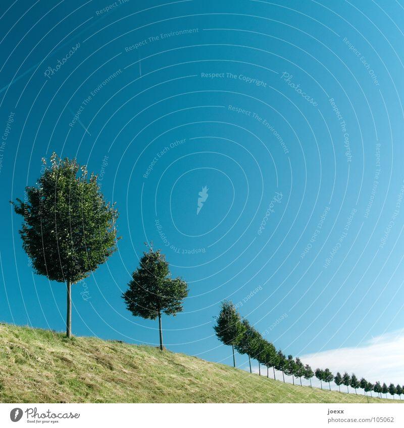 Luftschlange Himmel Baum grün blau Wolken Wiese Gras Garten Park Landschaft Umwelt Ordnung rund Reihe Kurve Blauer Himmel