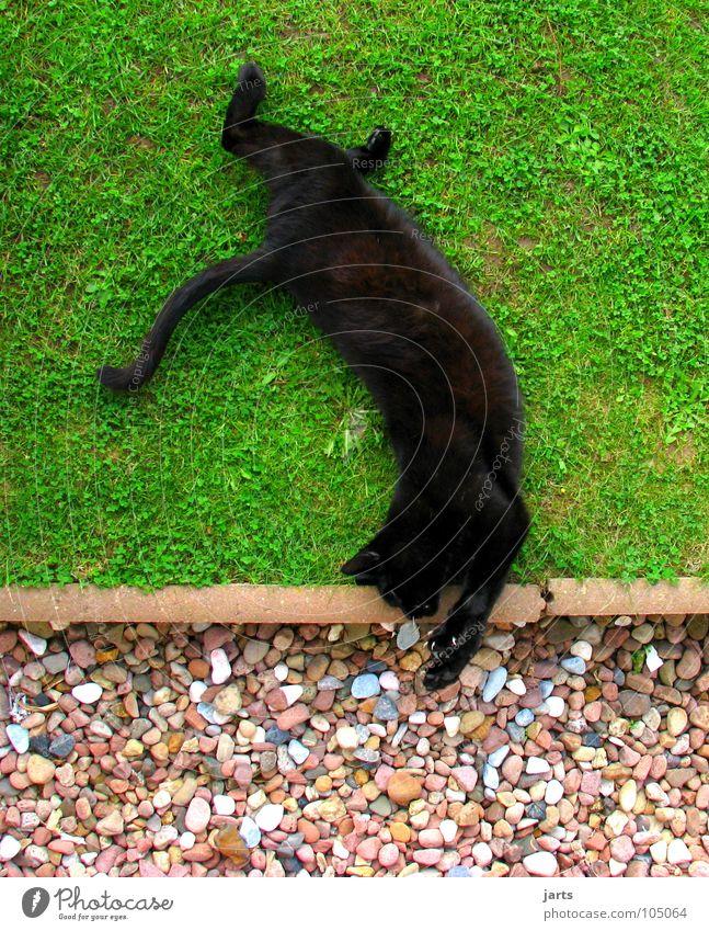 Katzenflickflack Tier Wiese springen Spielen schlafen Verkehrswege Säugetier Zirkus Akrobatik Salto Flick Flack