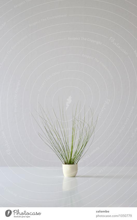 Tillandsie Gesundheit Leben harmonisch ruhig Meditation Häusliches Leben Wohnung Tisch Raum Umwelt Natur Pflanze Luft Gras Grünpflanze exotisch Haare & Frisuren