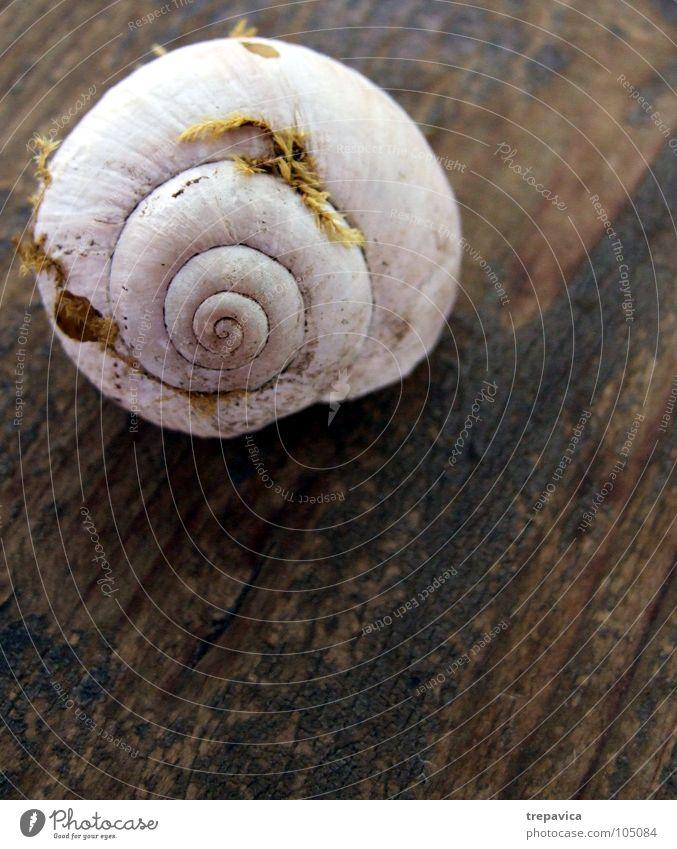 schnecke I Schneckenhaus Strand Haus Einsamkeit Tier langsam Sommer Holz Spirale weiß Schleim Hintergrundbild See Gras Wohnung Meer braun gelb Natur Regen