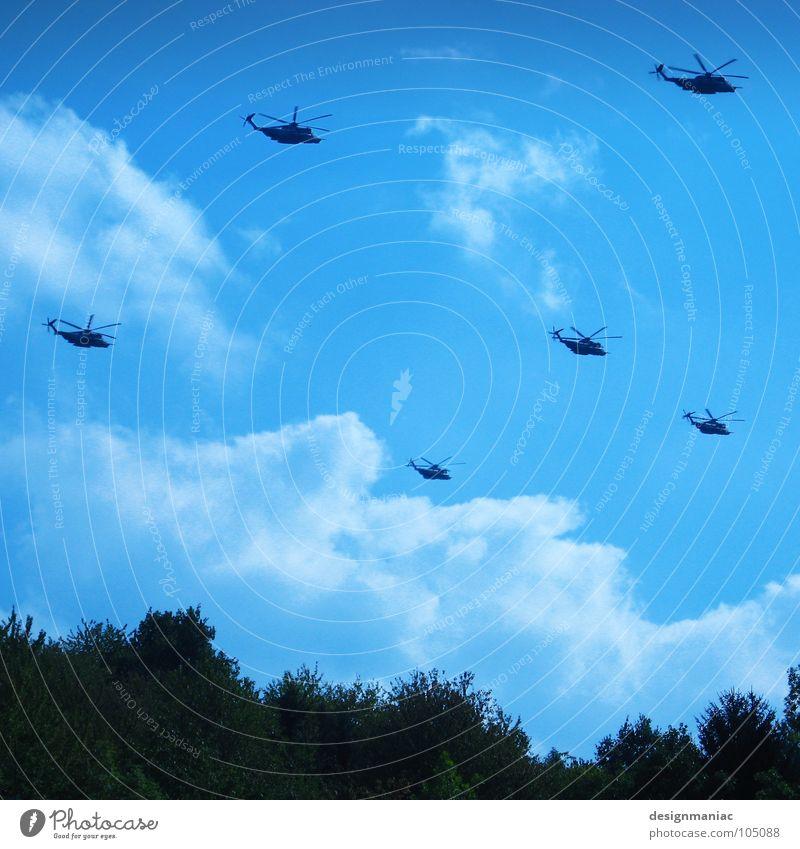 Heuschrecken Himmel Baum blau Wolken schwarz Wald dunkel oben klein warten Flugzeug groß frei hoch Luftverkehr Güterverkehr & Logistik