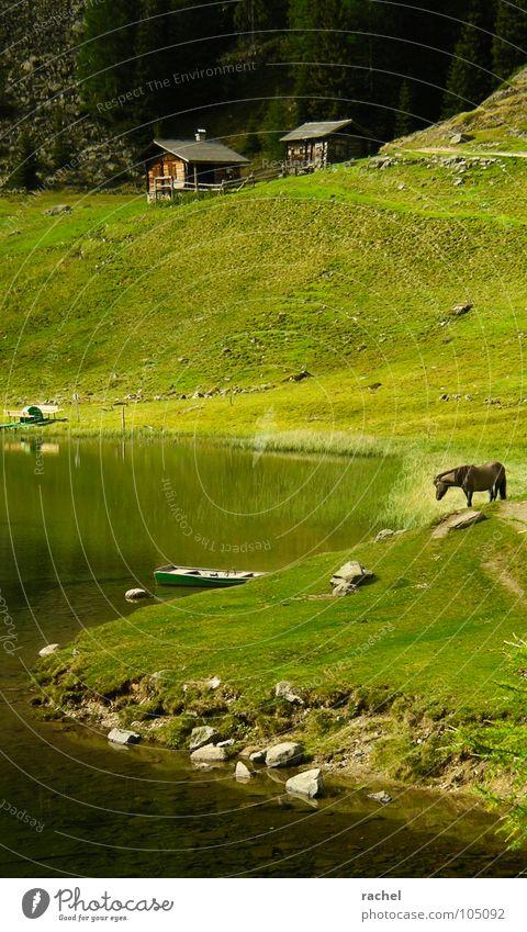 Zeitsprung Ferien & Urlaub & Reisen ruhig Erholung Wiese Gras Berge u. Gebirge Landschaft Zufriedenheit wandern Pferd Alpen Idylle Gelassenheit Hütte See Weide