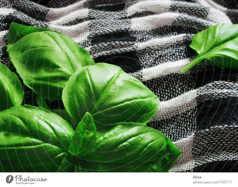 basil Lebensmittel Kräuter & Gewürze Ernährung Vegetarische Ernährung Gesundheit Duft Wellen Garten Küche Gastronomie Pflanze Topfpflanze Stoff Schal leuchten