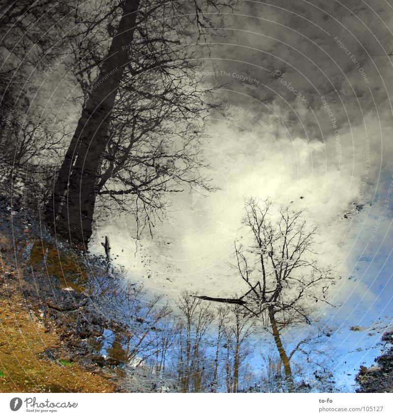 unten-oben Wasser Himmel Wald Spiegel Märchen Pfütze Spiegelbild unklar gemalt verkehrt vage