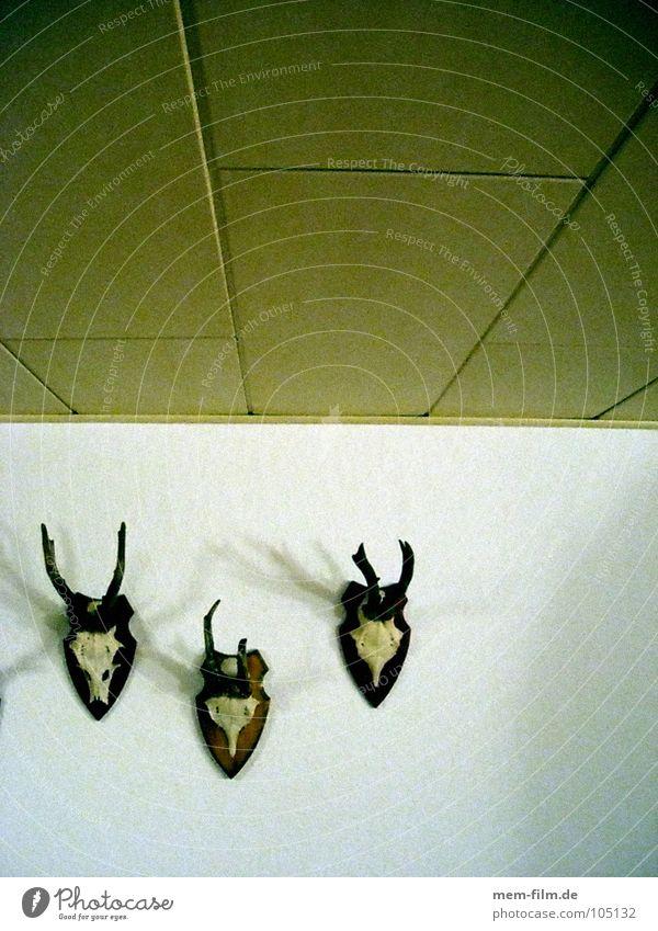 rehe auf lichtung Hirsche Horn braun Ekel Reh Skelett Tier Trophäe Totes Tier Paddel Brunft Jäger Stubenschmuck Umwelt Tierschutz Säugetier Wohnzimmer