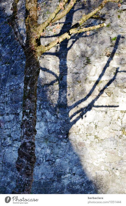 L'arbre bleu Umwelt Pflanze Baum Mauer Wand Stein stehen außergewöhnlich blau ästhetisch bizarr Farbe Kraft Natur Sinnesorgane Wachstum Wandel & Veränderung