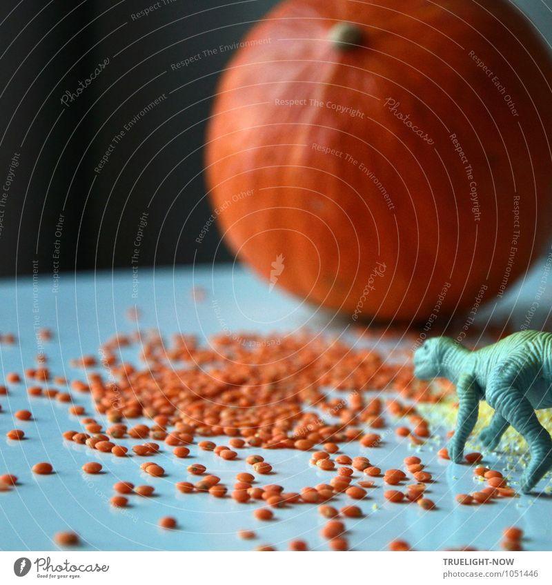 Dino, rote Linsen und Hokkaido-Kürbis Lebensmittel Gemüse Getreide Rote Linsen Ernährung Essen Frühstück Mittagessen Abendessen Bioprodukte