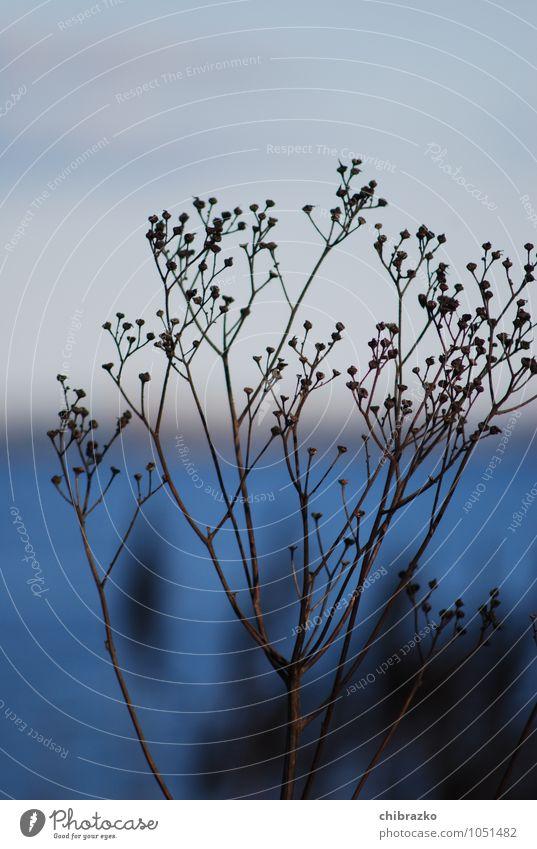 Winterfest blau Pflanze Wasser ruhig Winter Küste Sträucher Insel Ostsee