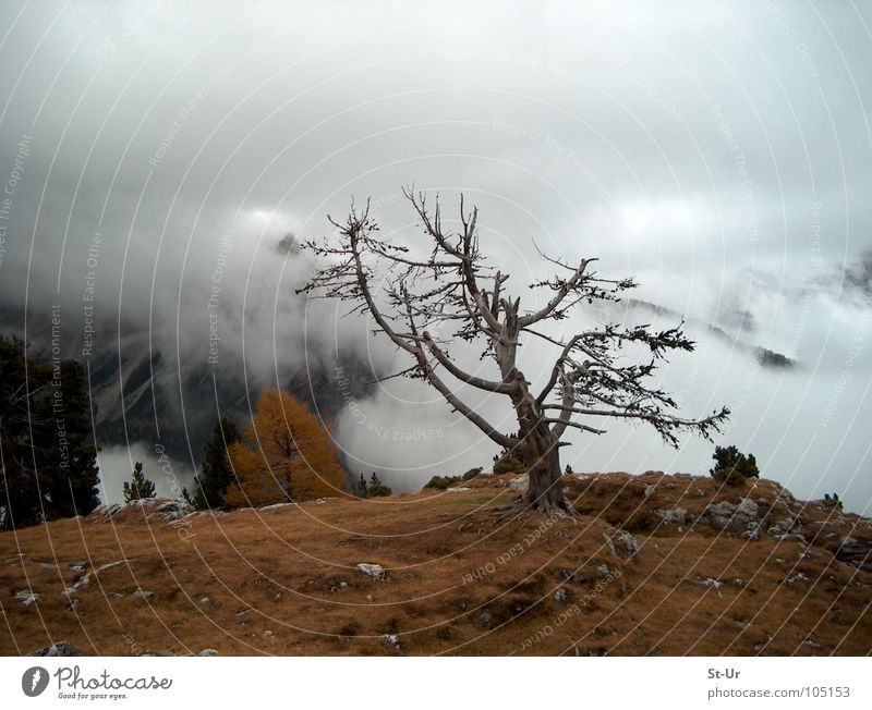 Hochgebirgsherbst Baum Berge u. Gebirge Herbst Nebel Trauer