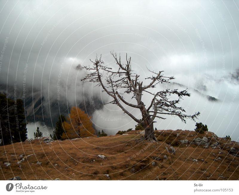 Hochgebirgsherbst Baum Nebel Herbst Trauer Nebenschwaden Berge u. Gebirge