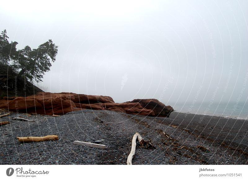 Baden gehen, Fehlanzeige! Umwelt Natur Landschaft Urelemente Wasser Himmel Wolkenloser Himmel Horizont Sommer schlechtes Wetter Unwetter Nebel Baum Grünpflanze