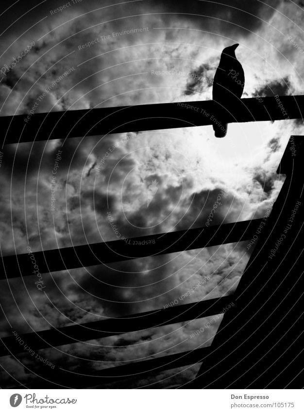 Nachtwolkenrabe Wolken dunkel Traurigkeit Vogel Angst bedrohlich gruselig böse Geister u. Gespenster Blut mystisch Friedhof Desaster Panik unheimlich Hölle