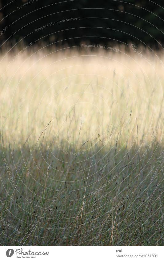 3 layers Natur Landschaft Sonnenlicht Sommer Gras Sträucher Park Wiese Niveau Kontrast Streifen hell dunkel Farbfoto Außenaufnahme Menschenleer