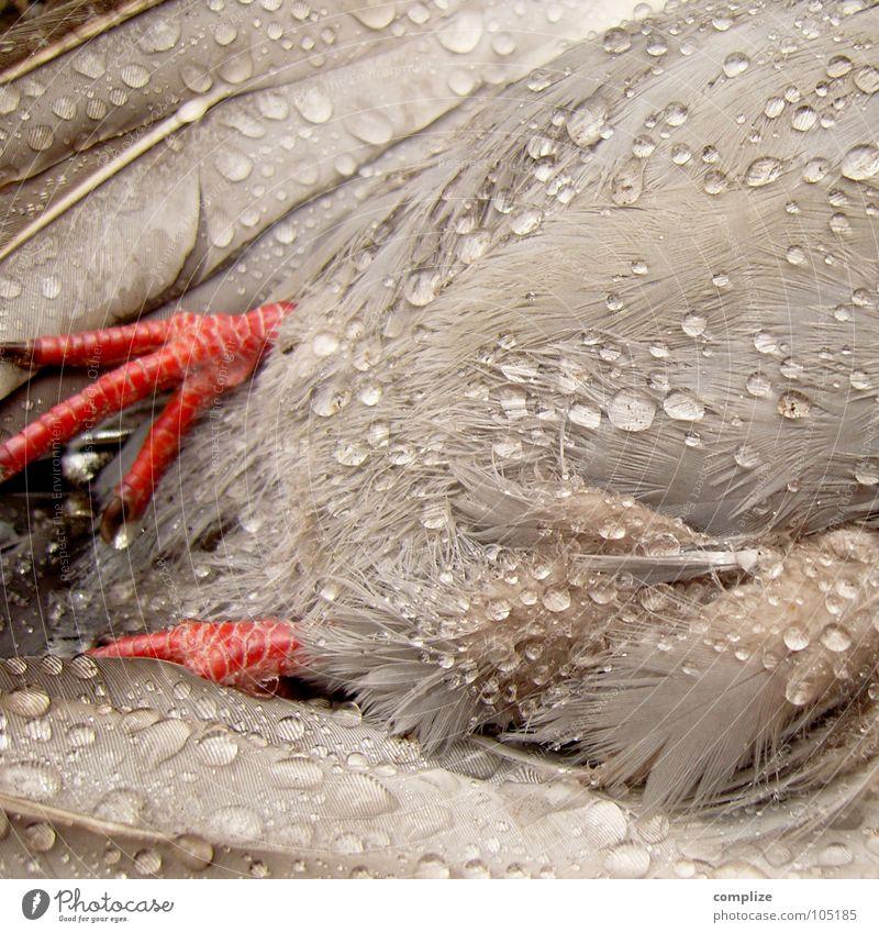 der nasse Stadtbewohner! rot Tod grau Fuß Regen Vogel fliegen Wassertropfen nass Seil frisch Trauer Feder Vergänglichkeit Bauch Verzweiflung