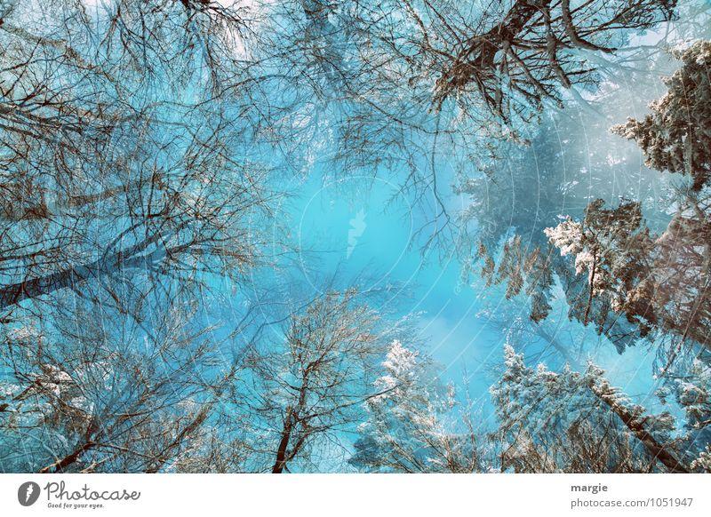 Winterzauber Himmel Natur blau Baum Einsamkeit Wald Umwelt Schnee Schneefall träumen Zufriedenheit Eis Freizeit & Hobby Wachstum Erfolg