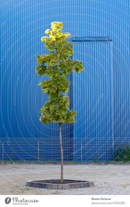Sommerliches Himmelblau Pflanze schön grün Baum Umwelt Wärme Wege & Pfade grau Metall Fassade Zufriedenheit Ordnung warten Ausflug
