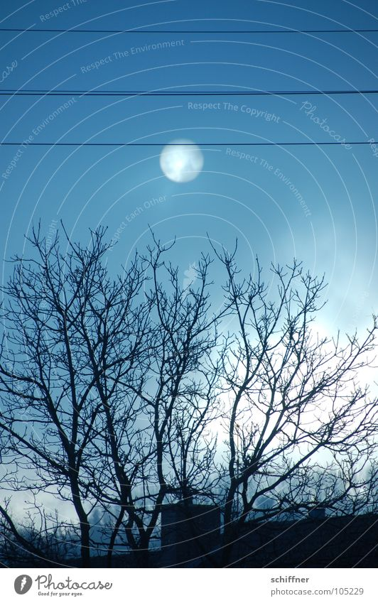 The Fog... Nebel Herbst Winter Licht dunkel Trauer gruselig Baum Dach Himmel Sonne Tod gruseln Kabel Traurigkeit