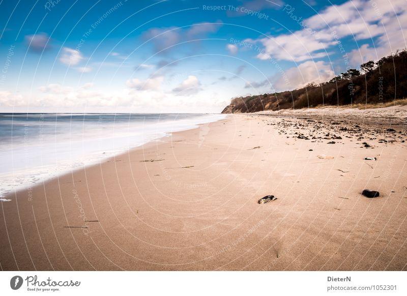 Küste Landschaft Ostsee blau braun schwarz weiß Mecklenburg-Vorpommern Rügen Meer Strand Sandstrand Baum Wolken Horizont Farbfoto Menschenleer