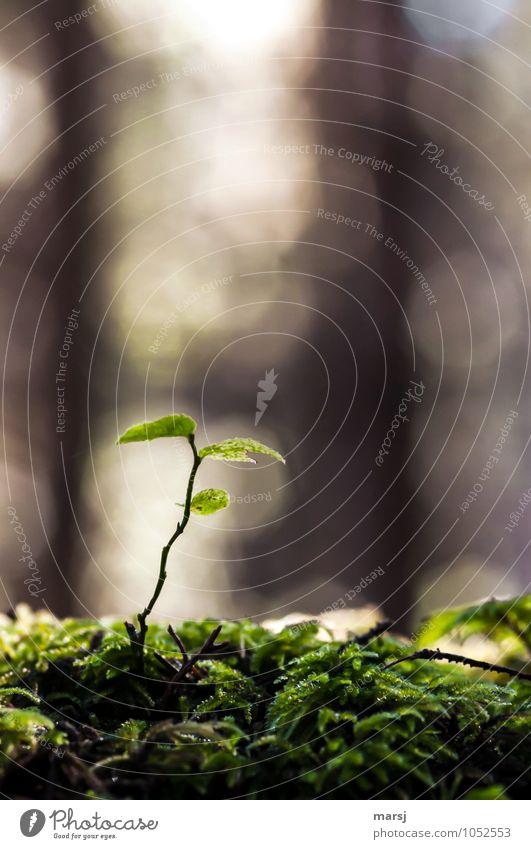 Einsam Natur Pflanze grün Sommer Einsamkeit Blatt ruhig dunkel Wald Traurigkeit Herbst natürlich klein träumen leuchten authentisch