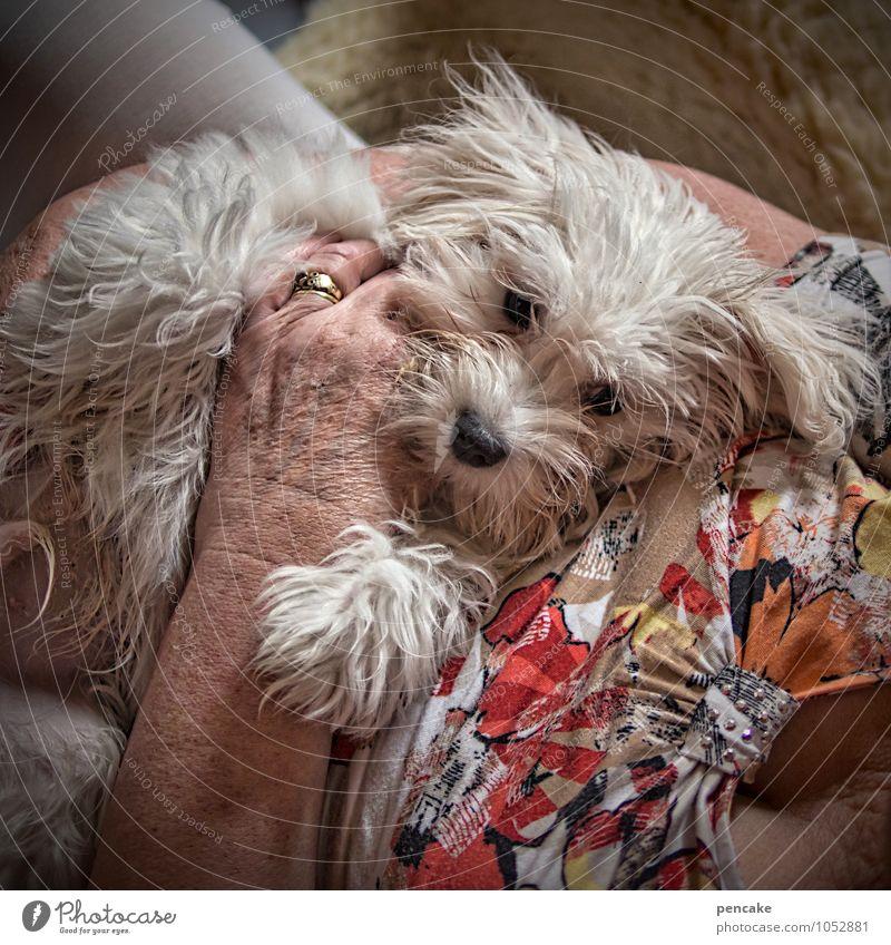 unbezahlbar Hund alt Hand Tier Senior feminin Zusammensein Freundschaft liegen Zufriedenheit 60 und älter Bekleidung genießen Lebensfreude Kommunizieren