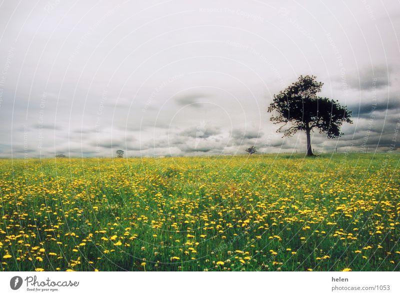 la mer jaune Himmel Baum Wiese