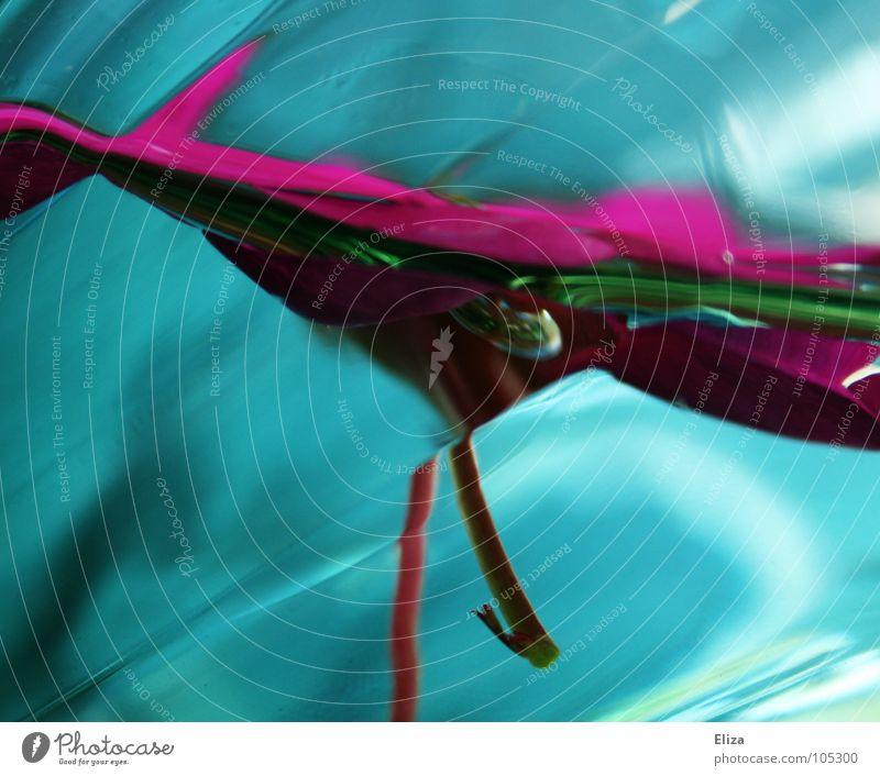 frisch verwischt Farbfoto abstrakt Licht Dekoration & Verzierung Lampe tauchen Natur Pflanze Wasser Blume Blatt außergewöhnlich nass grün rosa türkis zyan