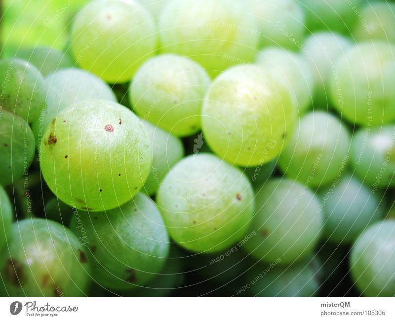 green berry Weintrauben Nahaufnahme viele grün süß fruchtig Vegetarische Ernährung Vegane Ernährung Rohkost Gesunde Ernährung Weinlese