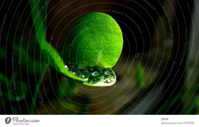 für dich... Regen Klee Kleeblatt frisch grün Makroaufnahme Nahaufnahme Wasser Wassertropfen Seil Garten Sonne jarts